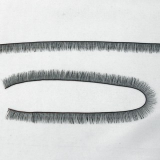 Eyelash Strip - Black
